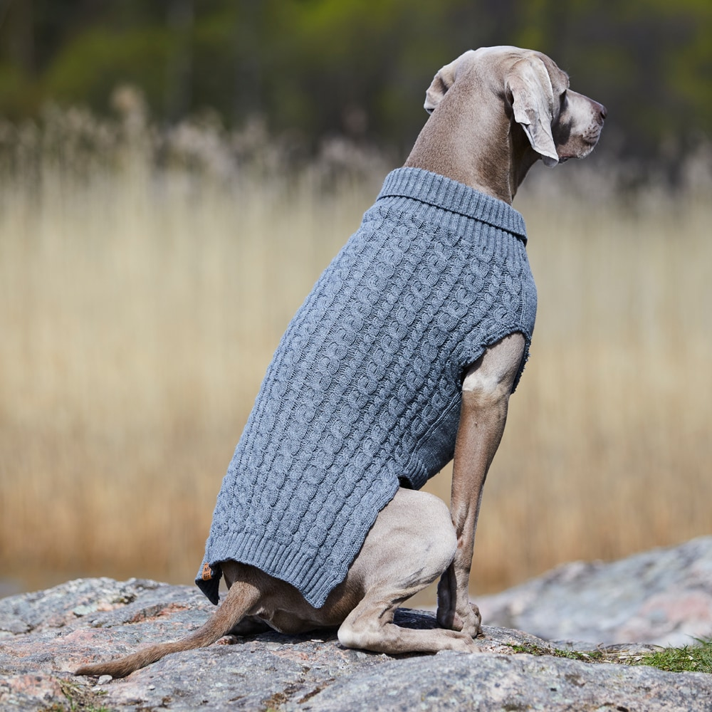 Hundesweater  Robin Showmaster®