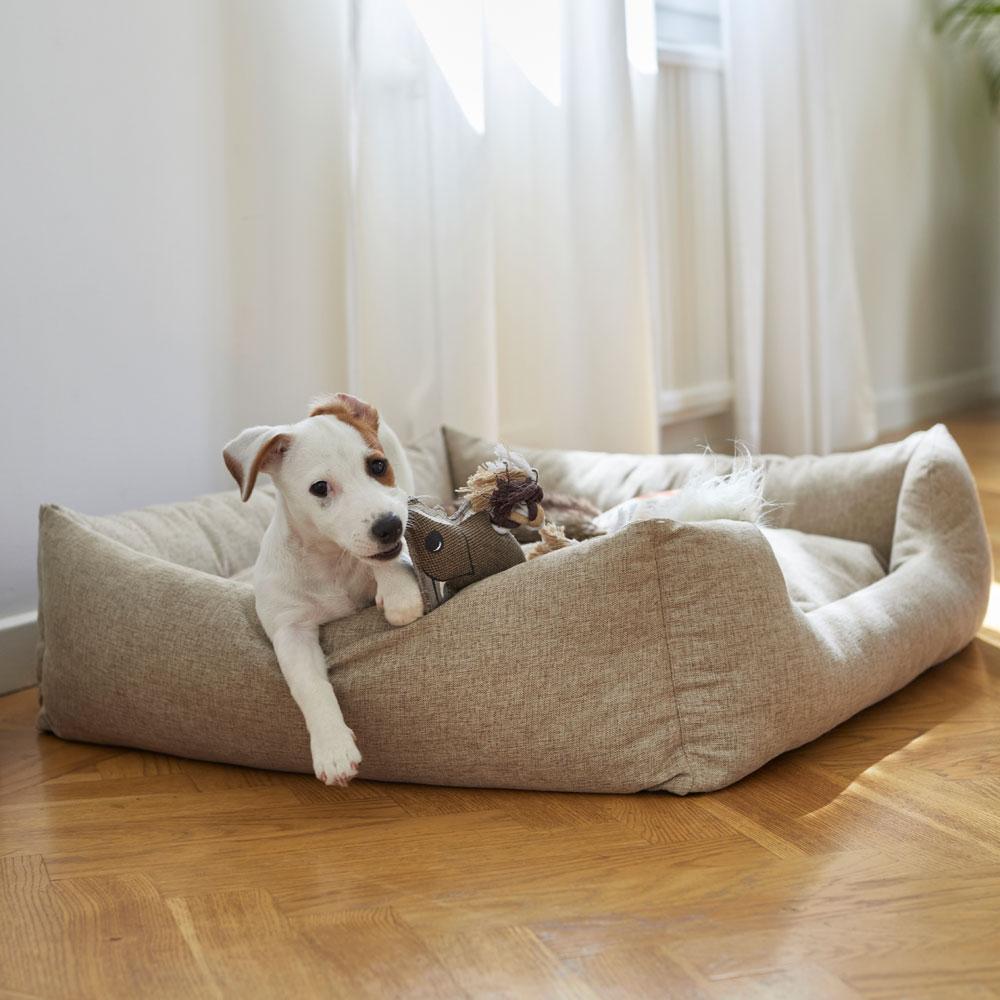 Hundeseng  Flax traxx®